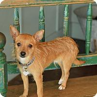 Adopt A Pet :: Dash - San Antonio, TX