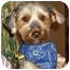 Photo 1 - Yorkie, Yorkshire Terrier Dog for adoption in stella, North Carolina - Monty