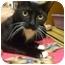 Photo 2 - Domestic Shorthair Cat for adoption in Orlando, Florida - Fiona