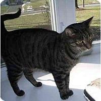 Adopt A Pet :: Junie - Jenkintown, PA