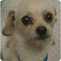 Adopt A Pet :: Watson - tiny cutie! - Phoenix, AZ