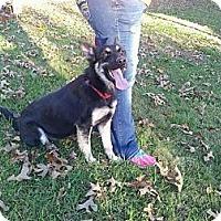 Adopt A Pet :: Ruby - Crystal River, FL