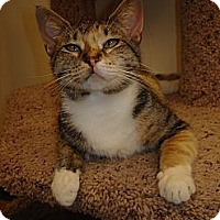 Adopt A Pet :: Hope - Chesapeake, VA