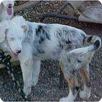 Adopt A Pet :: Miriam - Mesa, AZ