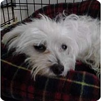 Adopt A Pet :: Sweet Pea - Brewster, NY