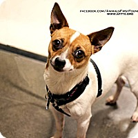 Adopt A Pet :: Tom - Irving, TX