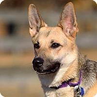 Adopt A Pet :: Jewel - Dacula, GA