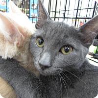 Adopt A Pet :: Bramble - Vero Beach, FL