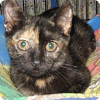 Adopt A Pet :: Pretty Girl - brewerton, NY