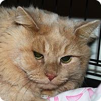 Adopt A Pet :: Spanky - North Branford, CT