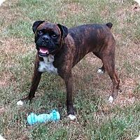 Adopt A Pet :: Dixie Chick - 4178 - Dayton, OH
