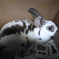 Adopt A Pet :: A1639154 - Los Angeles, CA