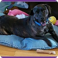 Adopt A Pet :: Mickey - Elburn, IL