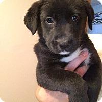 Adopt A Pet :: Panther - Bernardston, MA