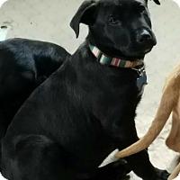 Adopt A Pet :: Micha - Somers, CT