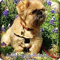 Adopt A Pet :: BUDDY in GEORGETOWN, TX - Austin, TX