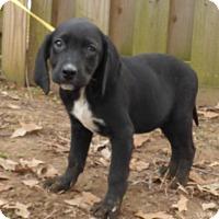 Adopt A Pet :: Kiki - Newburgh, NY