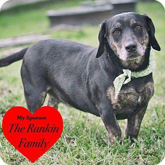 Basset Hound Mix Dog for adoption in San Leon, Texas - Sassy