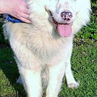 Adopt A Pet :: Kass - Alpharetta, GA