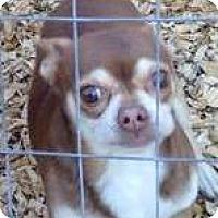 Adopt A Pet :: Choko - Orlando, FL