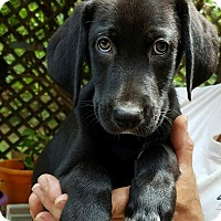 Adopt A Pet :: Hank - Charlestown, RI