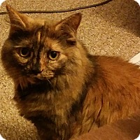 Adopt A Pet :: Muffin - brewerton, NY