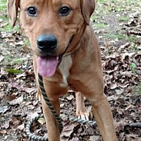 Adopt A Pet :: Peter - Capon Bridge, WV