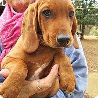 Adopt A Pet :: CHARLIE - Brookside, NJ