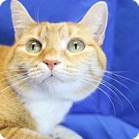 Adopt A Pet :: Mandy - Winston-Salem, NC