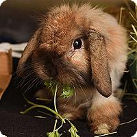 Adopt A Pet :: Mattie - Kanab, UT