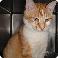 Adopt A Pet :: Augustus - Ridgeland, SC