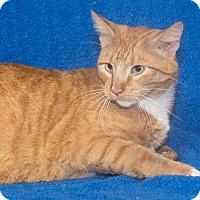 Adopt A Pet :: Henry - Elmwood Park, NJ