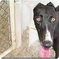 Adopt A Pet :: Paula - St Petersburg, FL