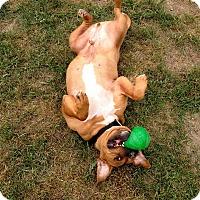 Adopt A Pet :: Bean - Lapeer, MI