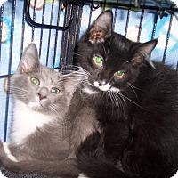 Adopt A Pet :: Silas - Richmond, VA