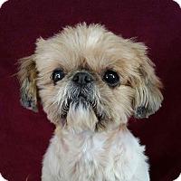 Adopt A Pet :: Mae Belle Montgomery - Urbana, OH