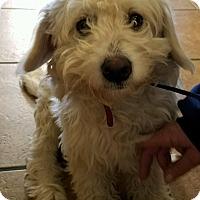 Adopt A Pet :: Axel - Thousand Oaks, CA