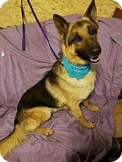 German Pinscher/German Shepherd Dog Mix Dog for adoption in Union Grove, Wisconsin - Simba & Senta