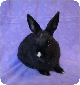Other/Unknown Mix for adoption in Los Angeles, California - Starlet