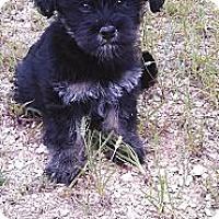 Adopt A Pet :: Gawen-adoption fee reduced - Glastonbury, CT
