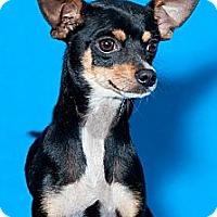 Adopt A Pet :: Adam - Phoenix, AZ