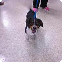 Adopt A Pet :: BO - Sugar Land, TX