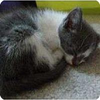 Adopt A Pet :: Willena - Port Republic, MD