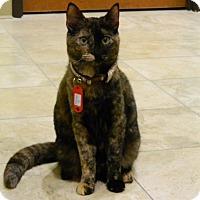 Adopt A Pet :: Luna - The Colony, TX