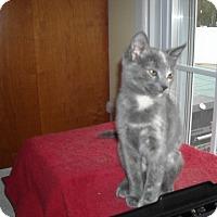 Adopt A Pet :: Ashes and Ashley - Riverside, RI