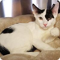Adopt A Pet :: Guiness - Venice, FL