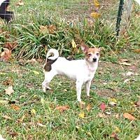 Adopt A Pet :: Squirt - Rowayton, CT