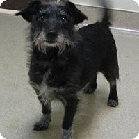 Adopt A Pet :: Bella - Gary, IN