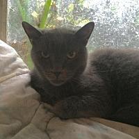 Adopt A Pet :: Rickie - Montreal, QC