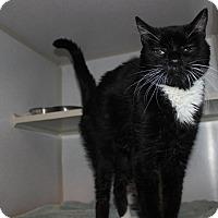 Adopt A Pet :: Buster - Jerseyville, IL